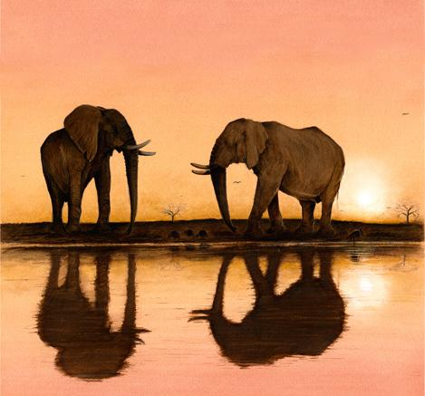 Tusks at Dusk